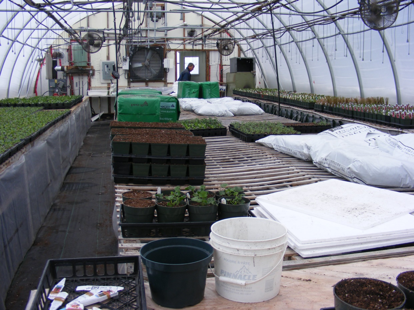 The inside of a greenhouse with long tables covered with piles of empty seedling trays and bags of soil