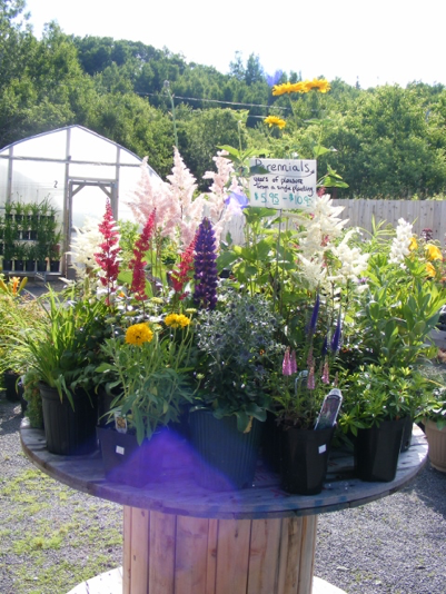 Array of perennials available at the Bayside garden centre